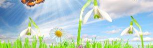 Lente-achtergronden-lente-wallpapers-lente-wallpaper-66-hd[1]